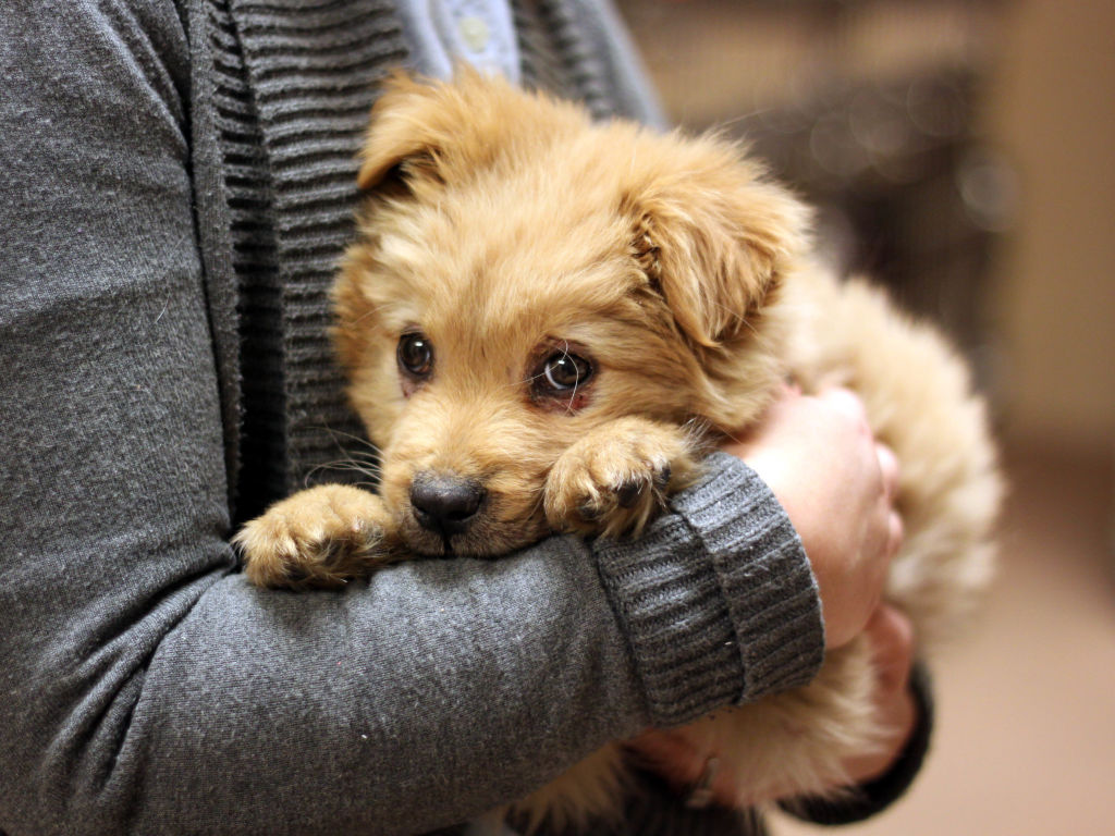 Atlanta Pet Rescue Dogs