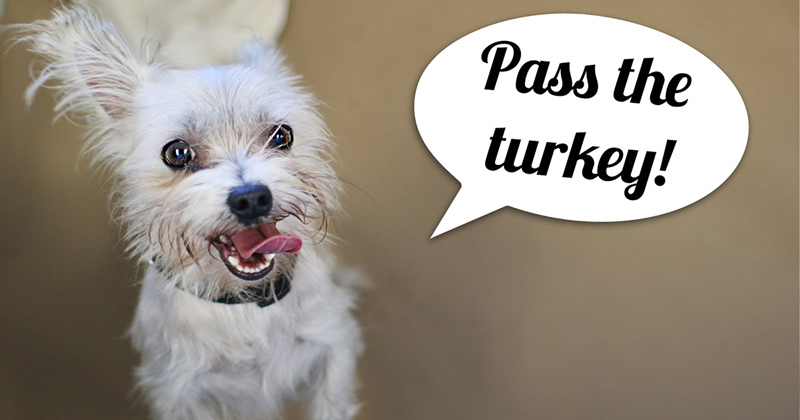 Thanksgiving Pet Tips