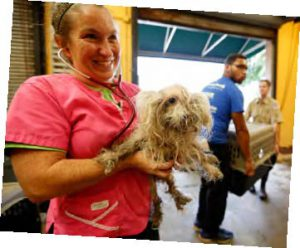 Animals from Louisiana Flood Areas Rescued