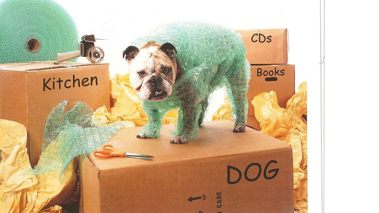 a dog with boxes and bubble wrap