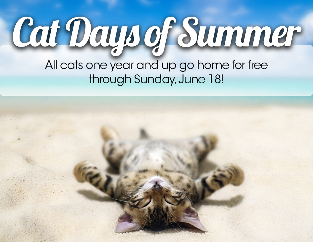 Cat Days of Summer