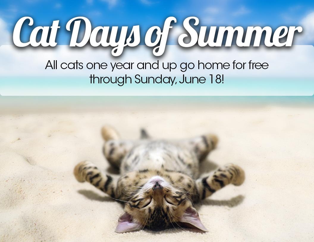 Cat Days of Summer