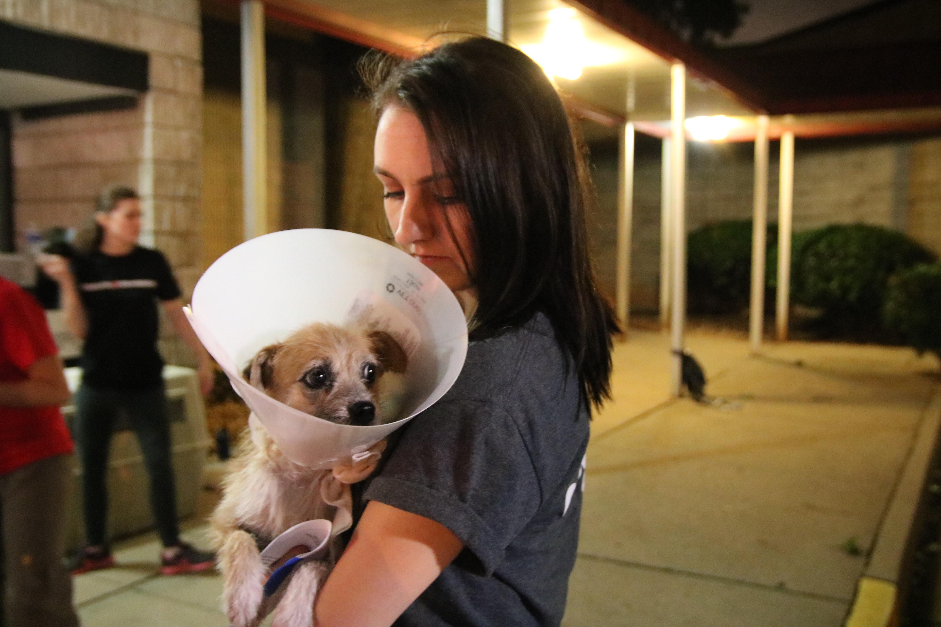 Sierra - Atlanta Humane Society   Toy Dog Rescue Atlanta