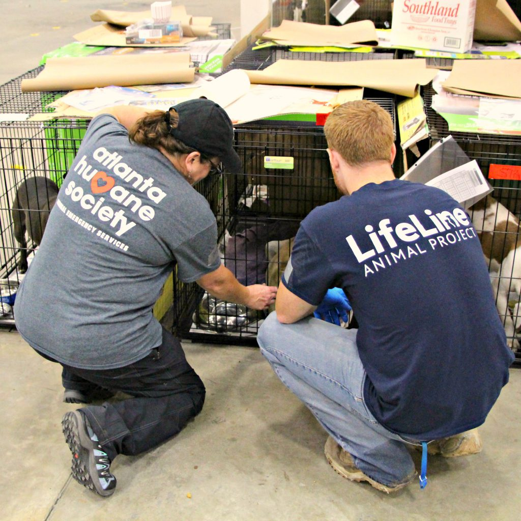 Partnership In Atlanta Atlanta Humane Society