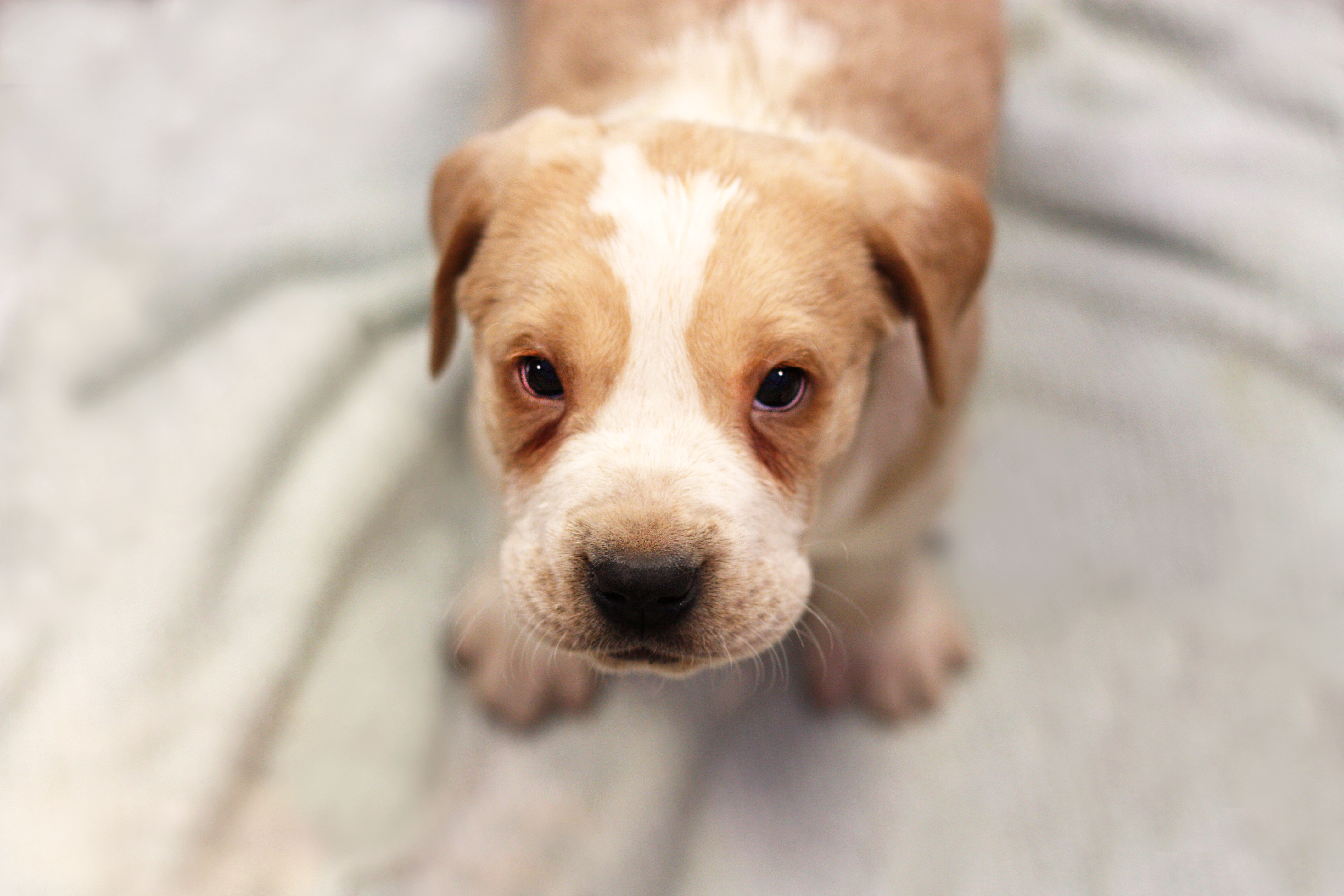 Puppy affected from Parvo