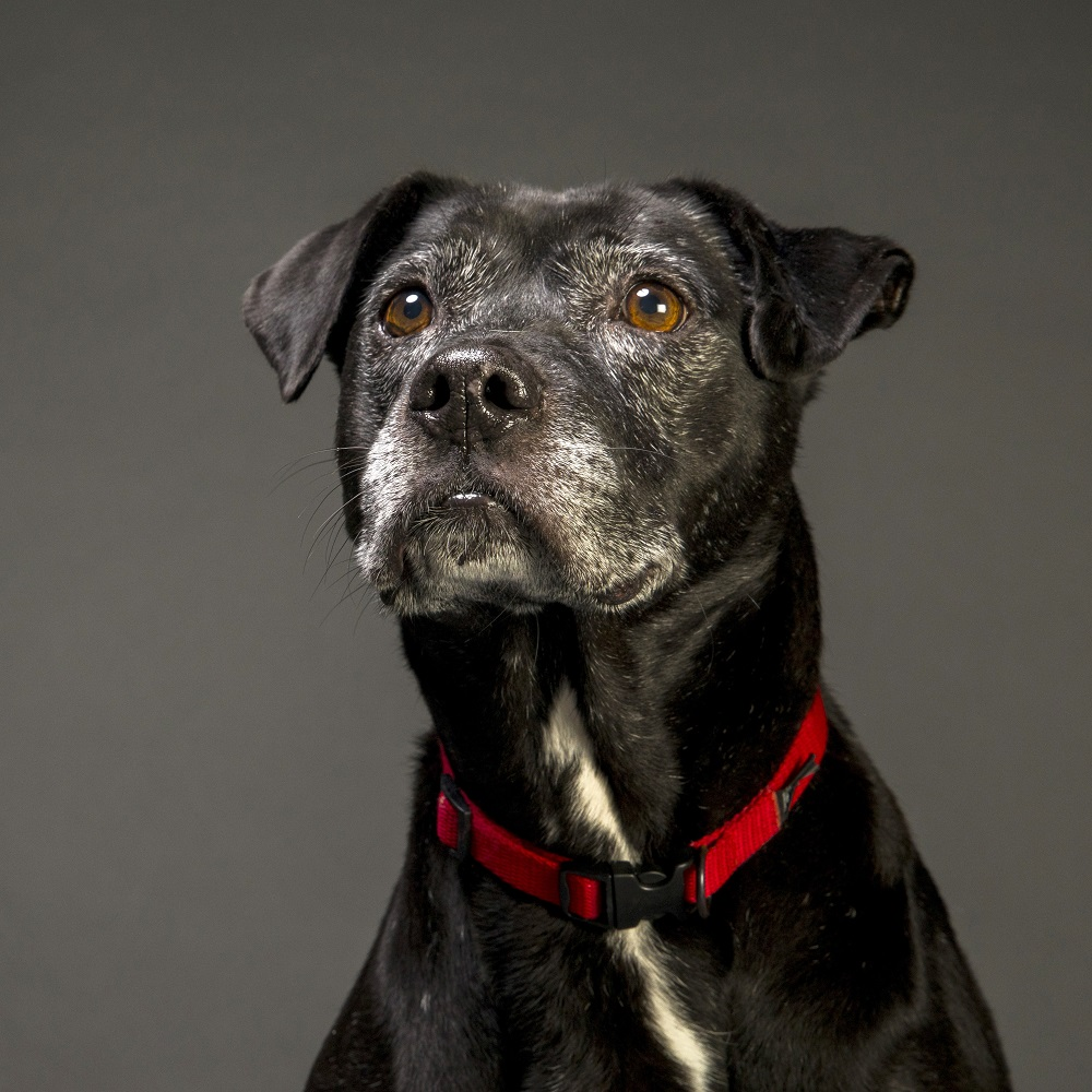 5 Reasons to Choose a Senior Pet!