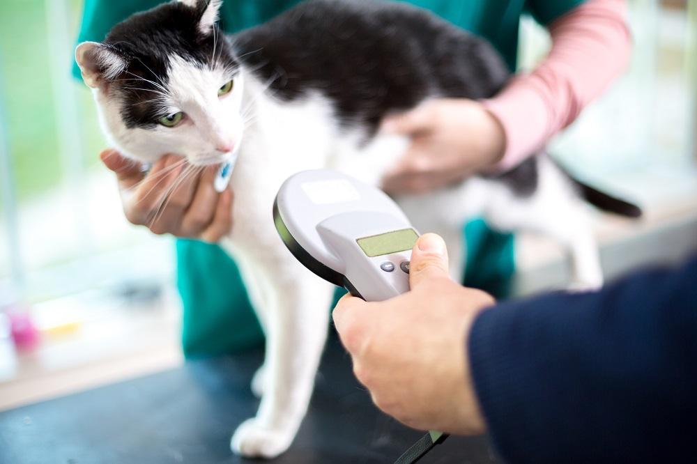 Microchip Awareness Day - Atlanta Humane Society