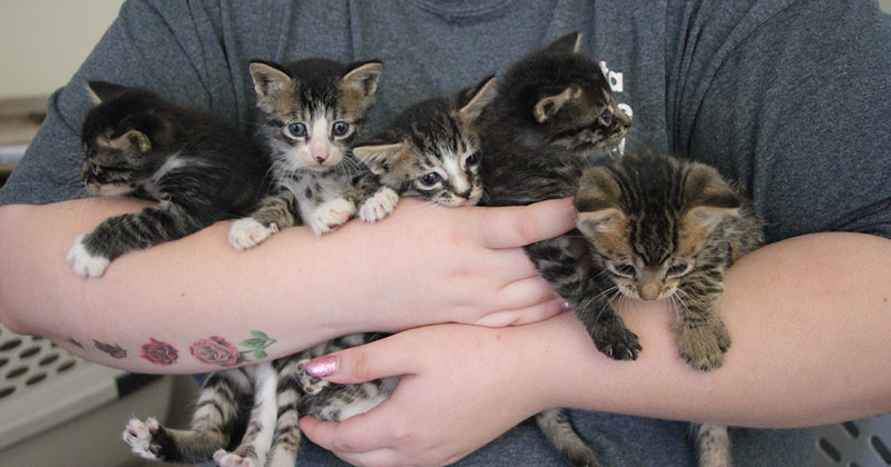 Kittens rescued from the path of Hurricane Florence.