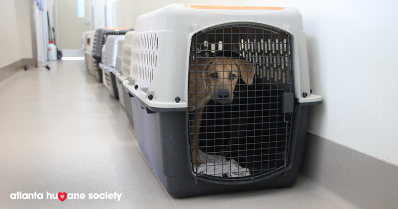 Dog in crate rescued from path of Hurricane Florence.