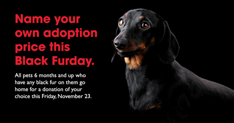 Black Furday. Name your own adoption price.