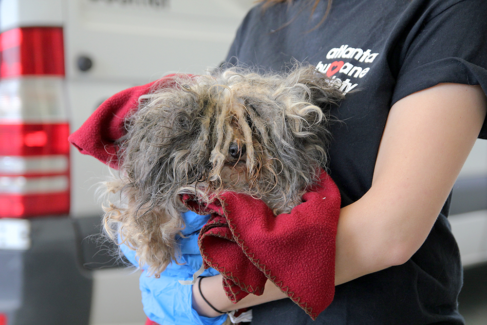 40 Dogs Rescued From Puppy Mill Atlanta Humane Society