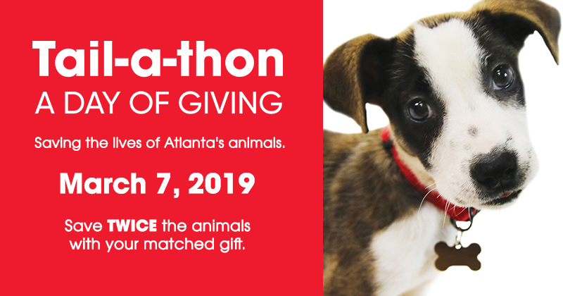 Tail-a-thon: Day of Giving