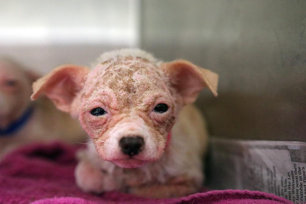 Harriet Pippa Atlanta Humane Society