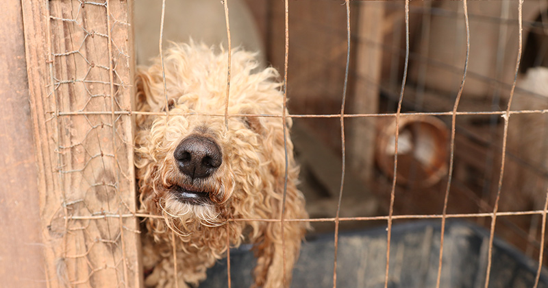 One of the dogs rescued from a puppy mill in Georgia