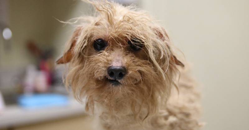 One of the dogs rescued from a small breed puppy mill
