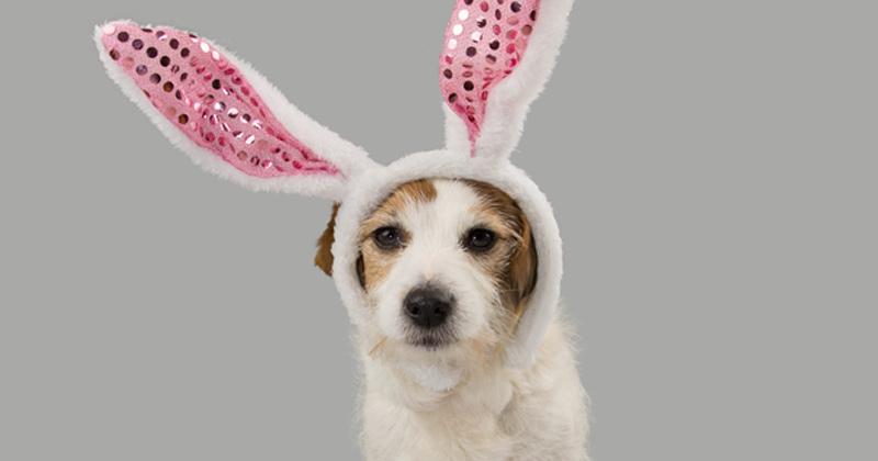 Free Pet Adoptions!