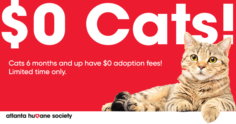 $0 Cat Adoptions: Learn more.