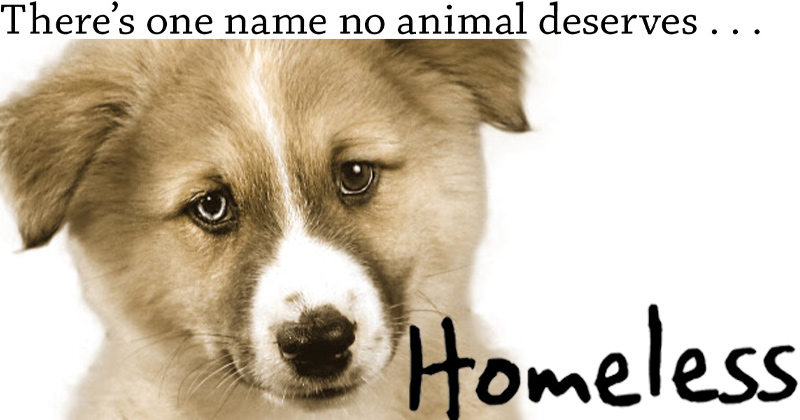 There's one name no animal deserves… Homeless.