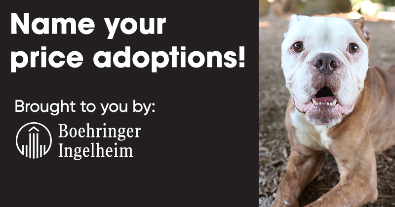 Name Your Price Adoptions: Learn more.