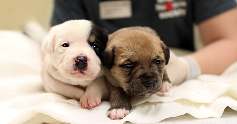 Two puppies getting a check up