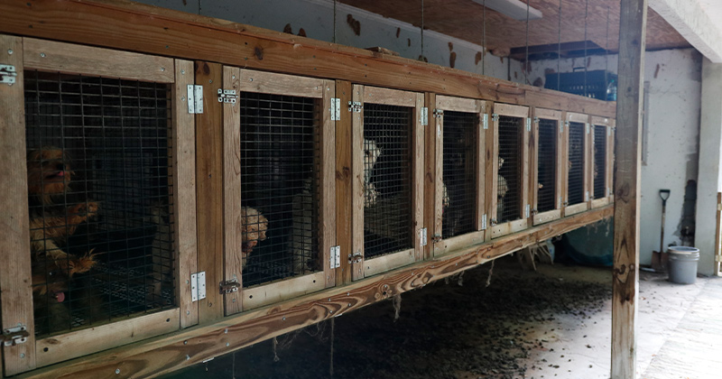 Crates of the Miltipoos rescued from a property in Monroe County