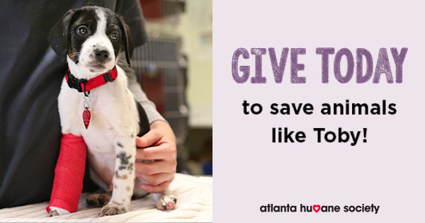 Give to help animals like Toby: Learn more.