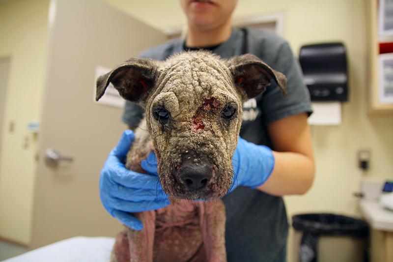 Lucille receiving care