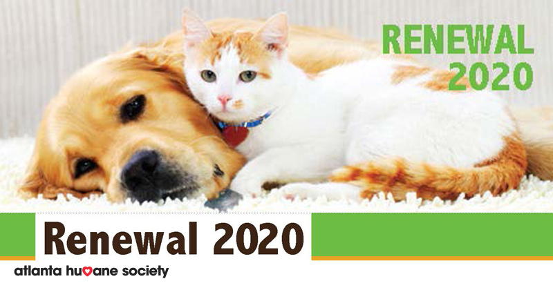 Renewal 2020: Friends Like You