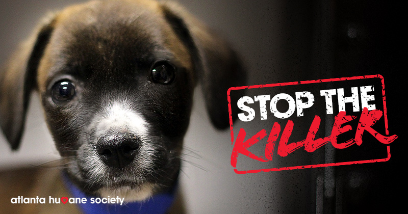 Stop The Killer Parvovirus Atlanta Humane Society