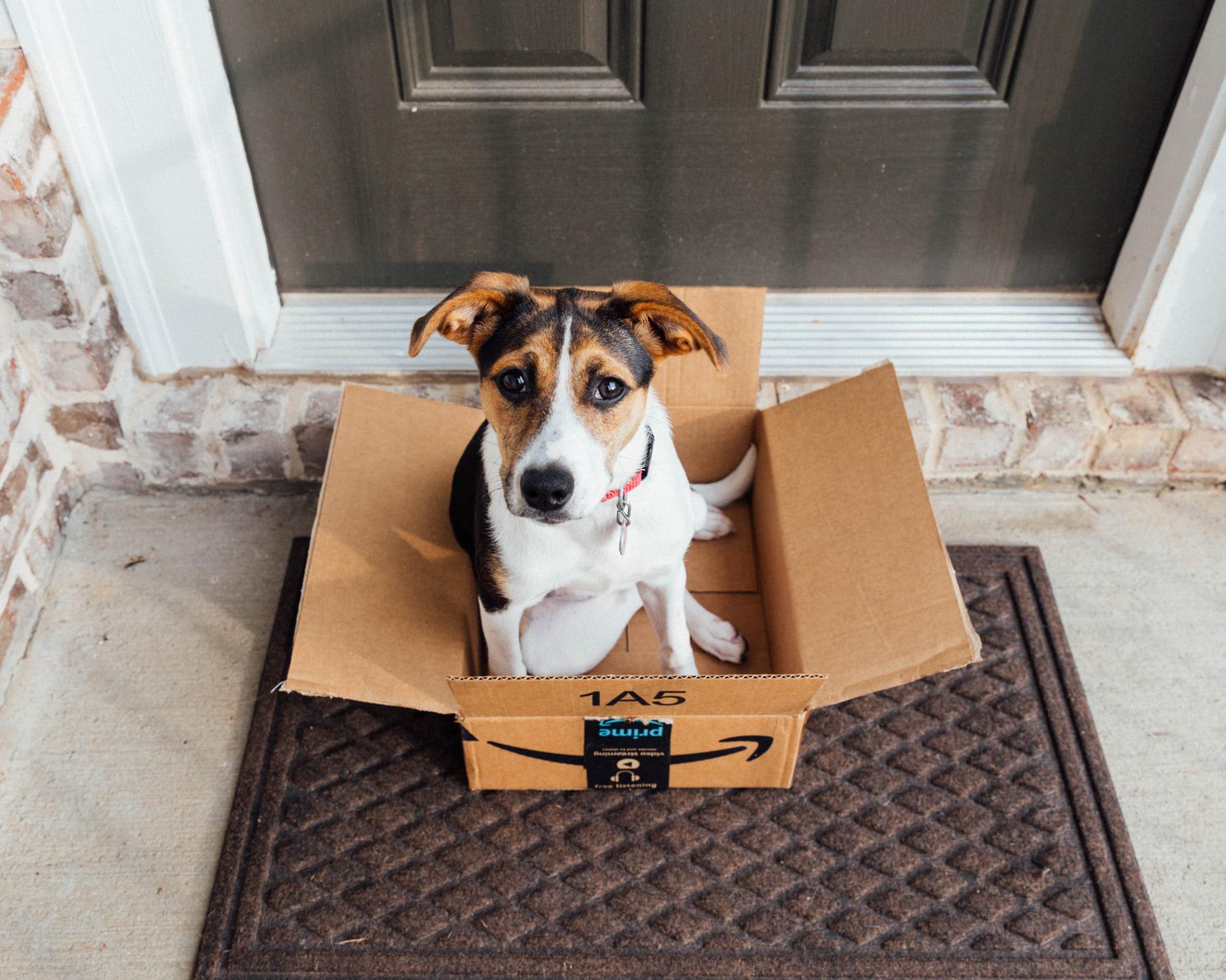 dog in amazon box
