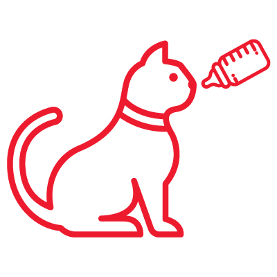 AHS KittenIcons Feeding