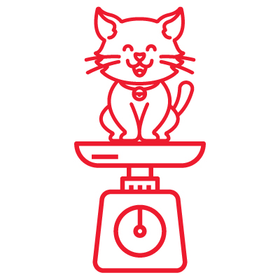 AHS KittenIcons Weighing