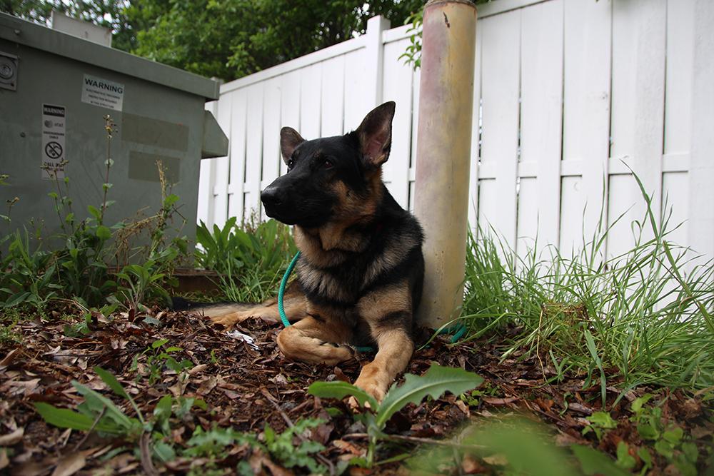 Max Atlanta Humane Society