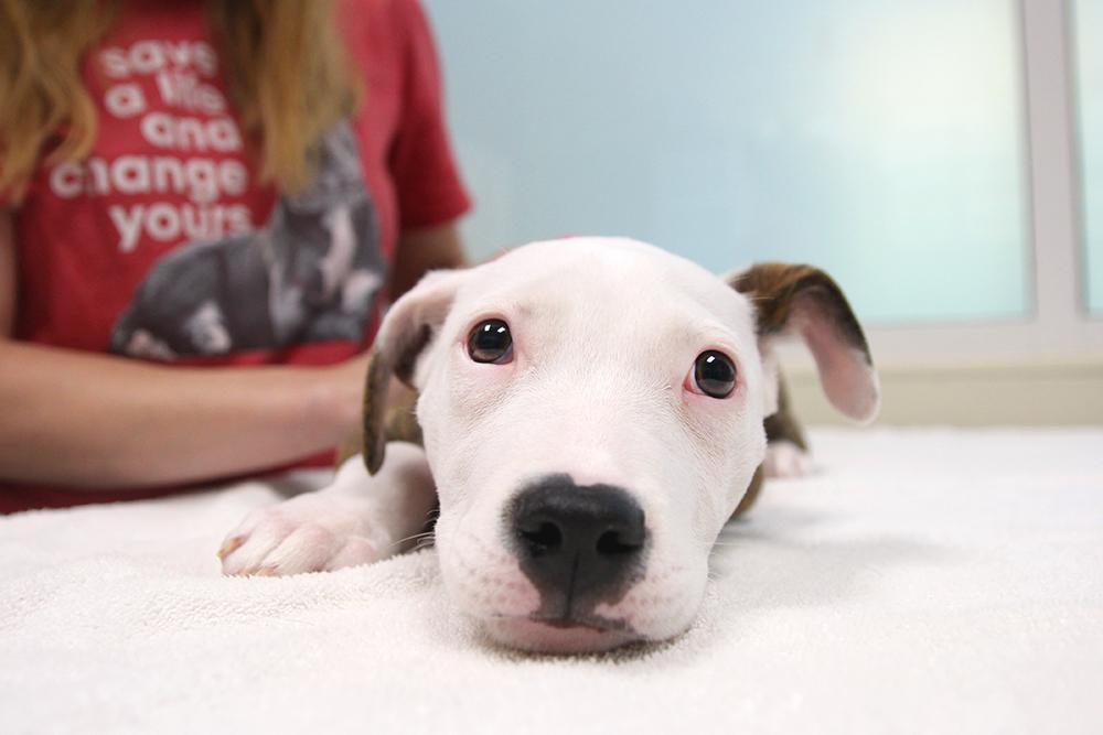 Maisey S Heart Atlanta Humane Society