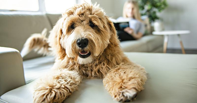 fluffy dog camera
