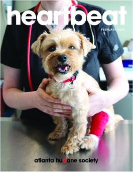 veterinary holding tan dog