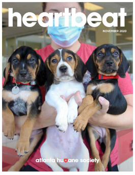 magazine cover with three dogs