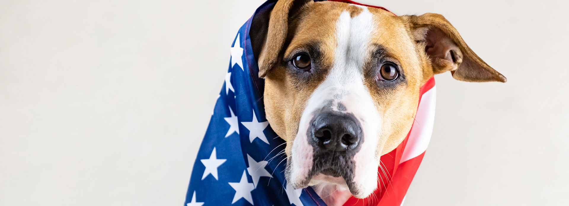 American Heroes Adoption Program
