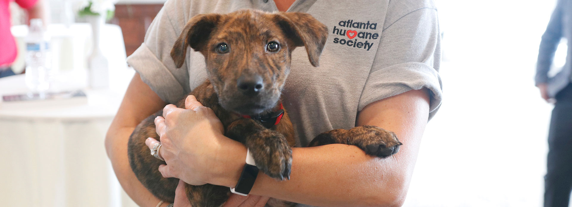 Businesses that give back make a lifesaving difference for puppies like this brown one being held