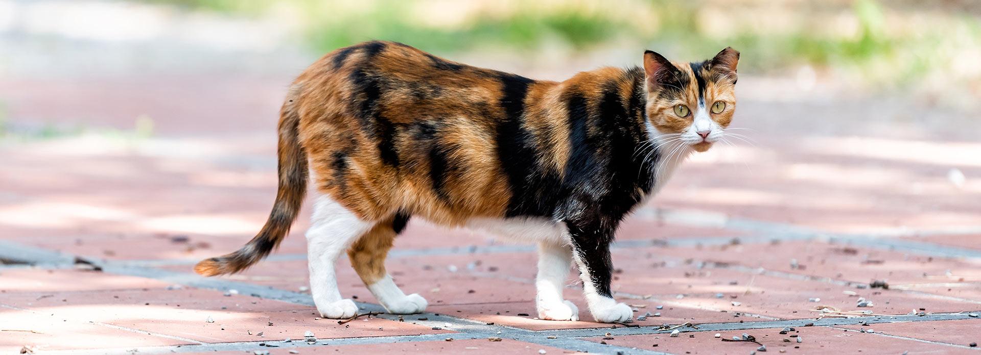 Community Cats Trap Neuter Return