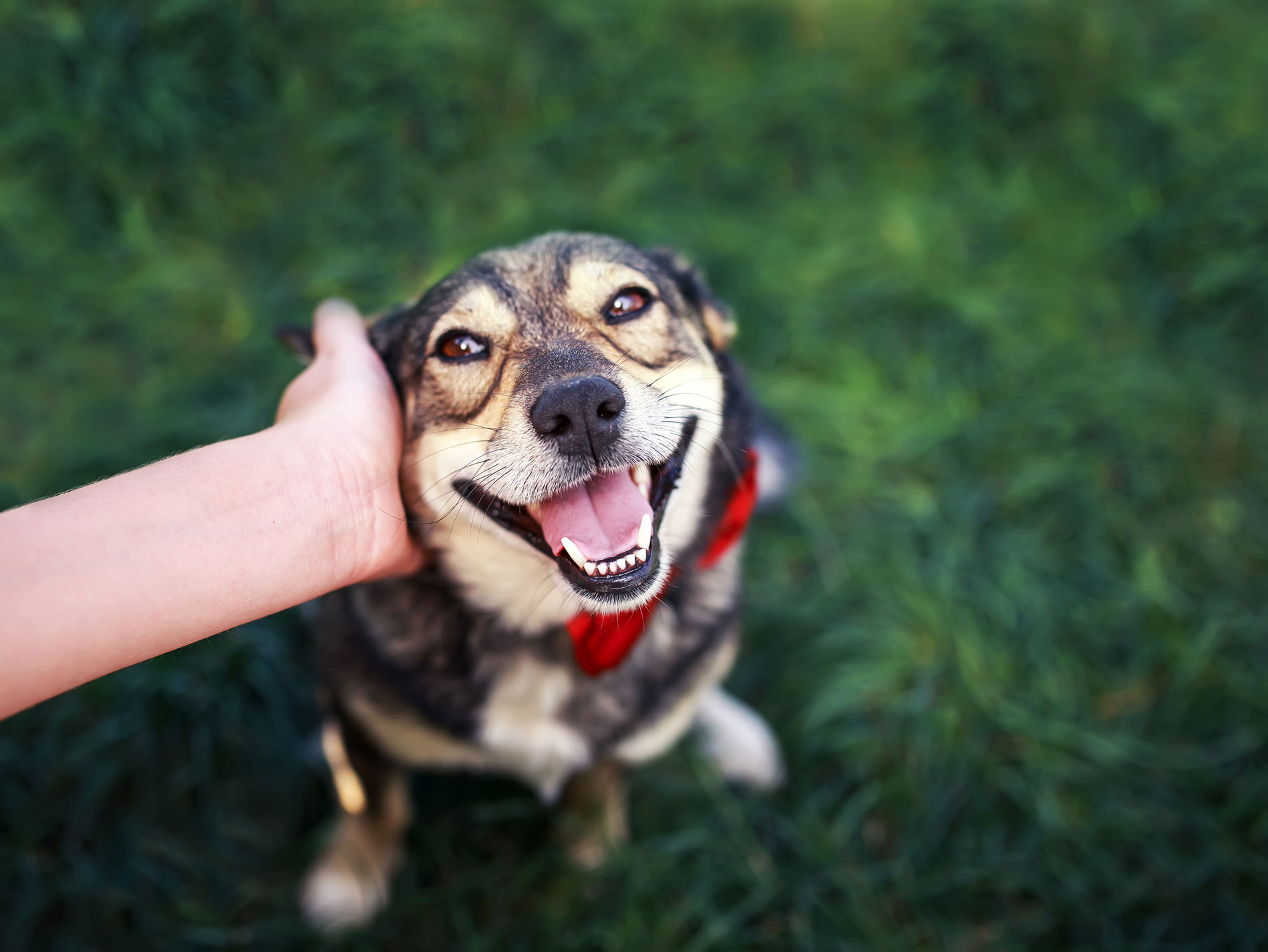 Resources for dog parents
