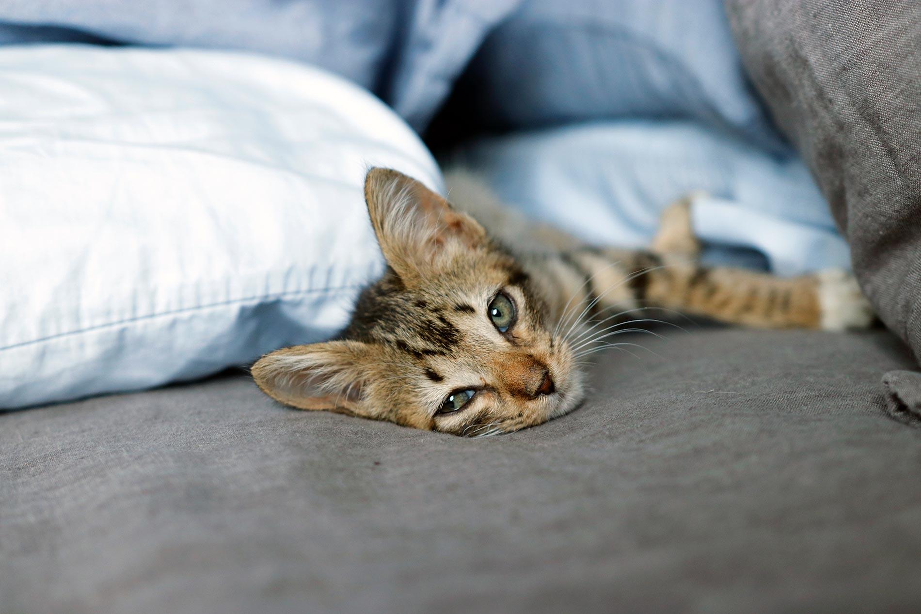 Getting Your Kitten Settled