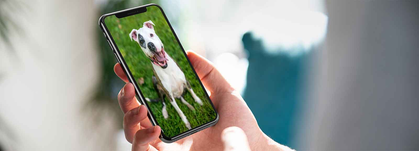 Receive a Pet Alert on your mobile device