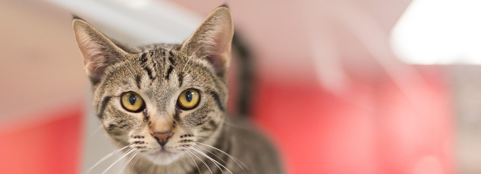 Cat Pet parent resources