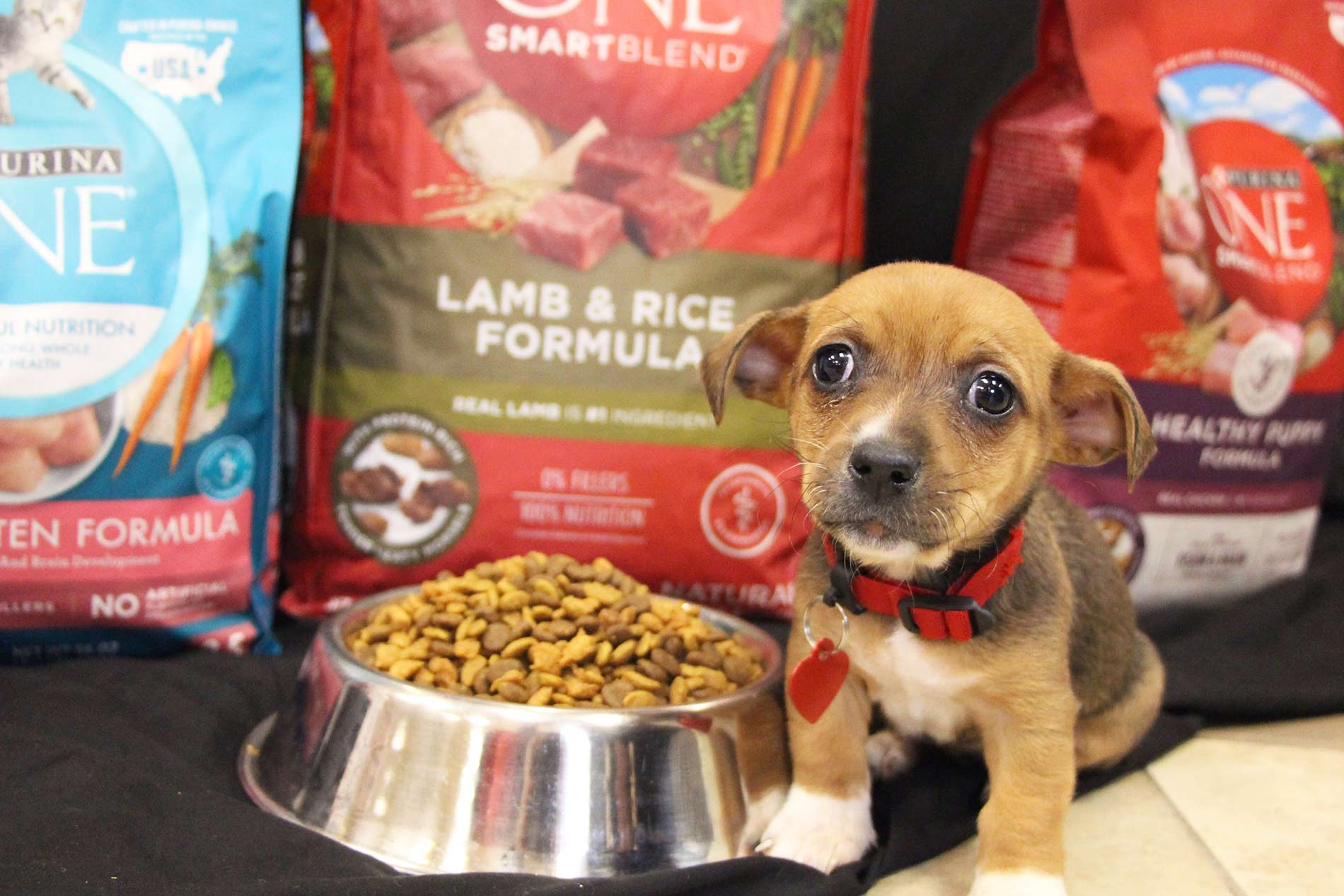 Learn about your pet's food