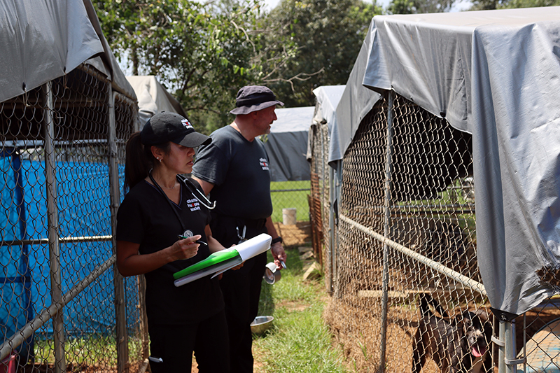 Animal Protection Unit Walking the Site of a Neglect Case Between Fence Kennels