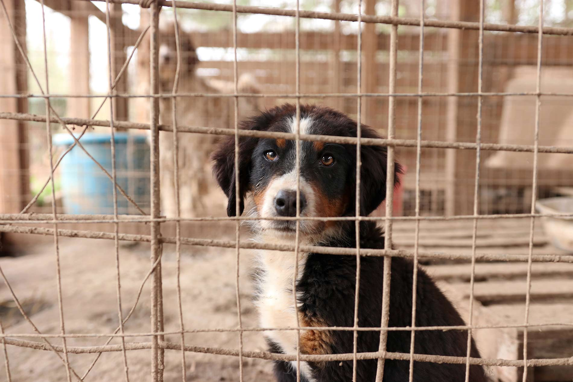 Cruelty Investigation