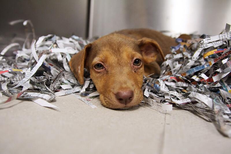 Abigail Parvo Puppy Kennel 800x533 1