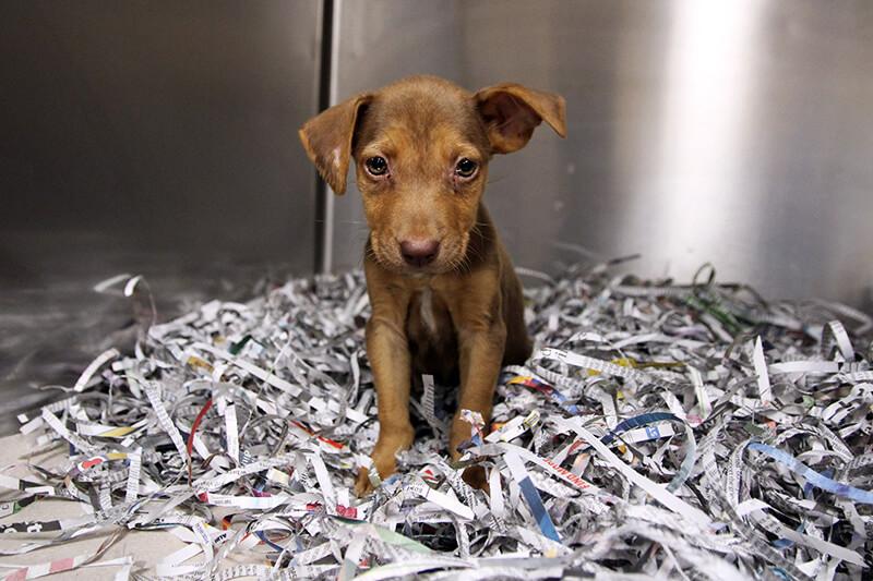Abigail Parvo Puppy Kennel 800x533 2