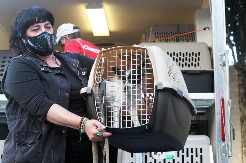 Dog Being Unloaded Hurricane Ida